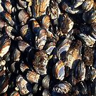 Mussles by Jeffrey  Sinnock