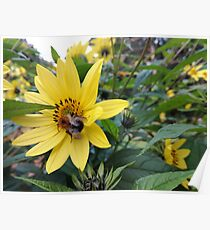 Yellow Flower With Bee  Poster