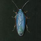 Panchlora Cockroach by Djjacksonart