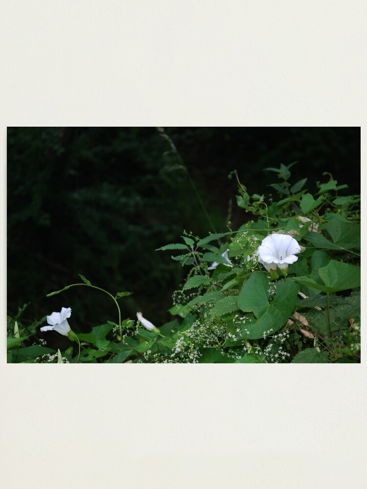 Alternate view of Flowers by the River Photographic Print