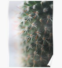 Cactus with red spines - 2018 Poster