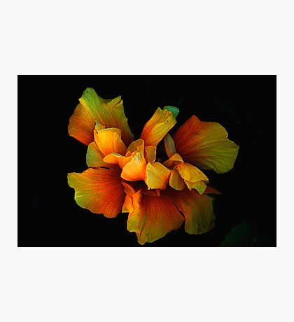 ALIEN PETALS Photographic Print