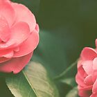 Camellias by LawsonImages