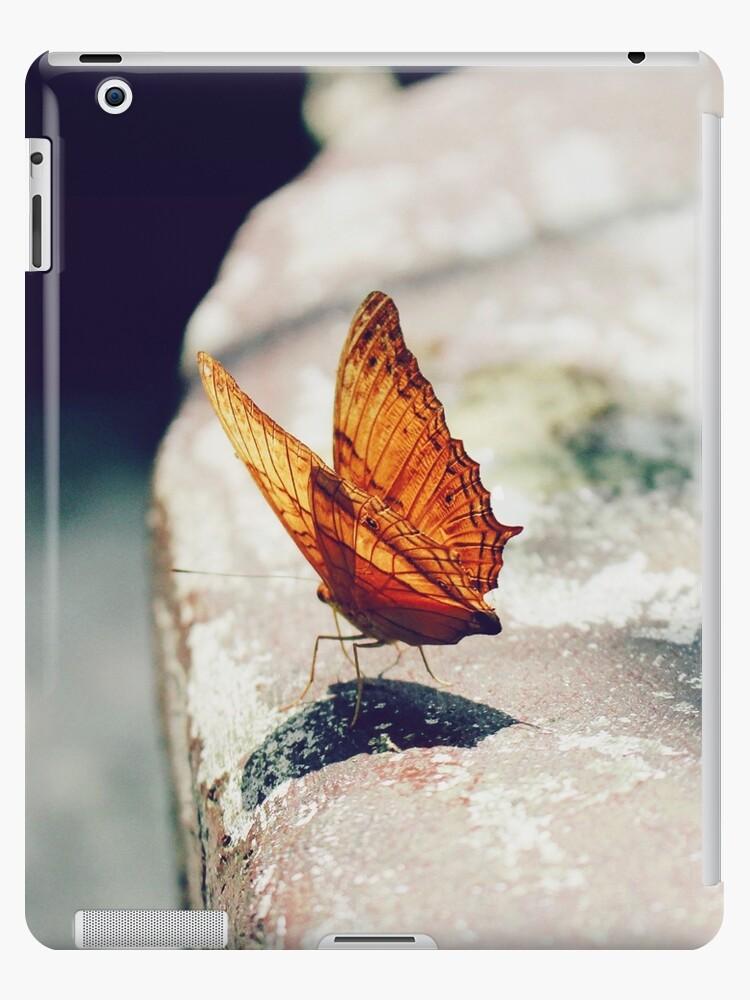 butterfly by Sharmin Zaman Jolly