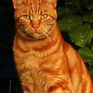 Ein Feind in der Katzenform - Macavity von BlueMoonRose
