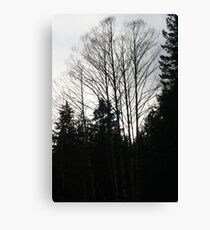 """trees"" Canvas Print"