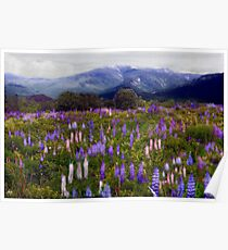 Etherial Lupines Poster