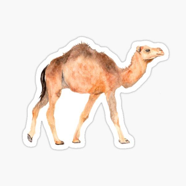 camello Pegatina