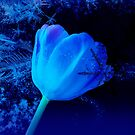 Winter Tulip Blue Theme 2 by hurmerinta
