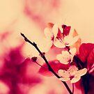 spring by Ingrid Beddoes