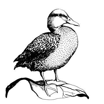 Cute Duck illustration by linnw