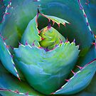 Euphorbia superbia for y'all-ia by alan shapiro