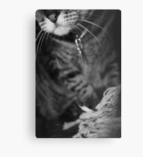 Wiskers & Threads Metal Print