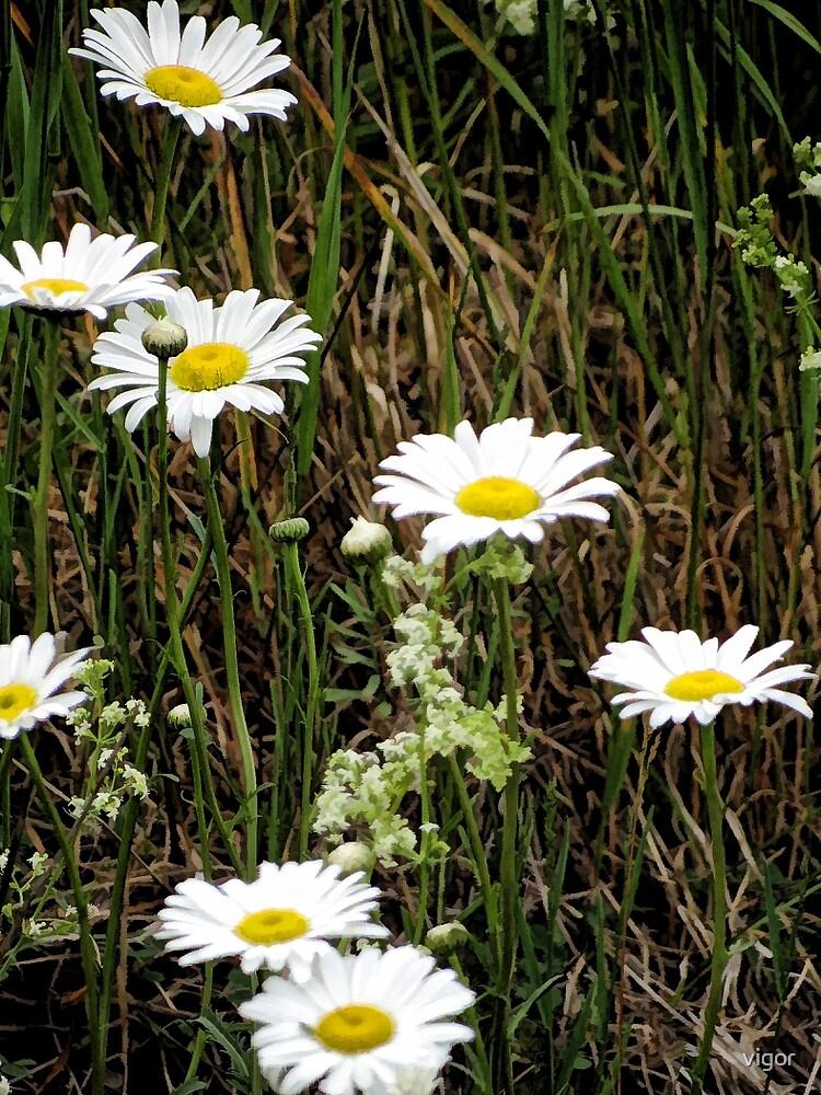 Daisy Field by vigor
