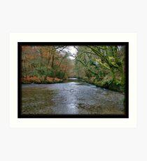 Plymbridge Woods Art Print