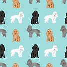 Toy Poodles mixed coat colors dog breed gifts pet portraits must haves poodles by PetFriendly