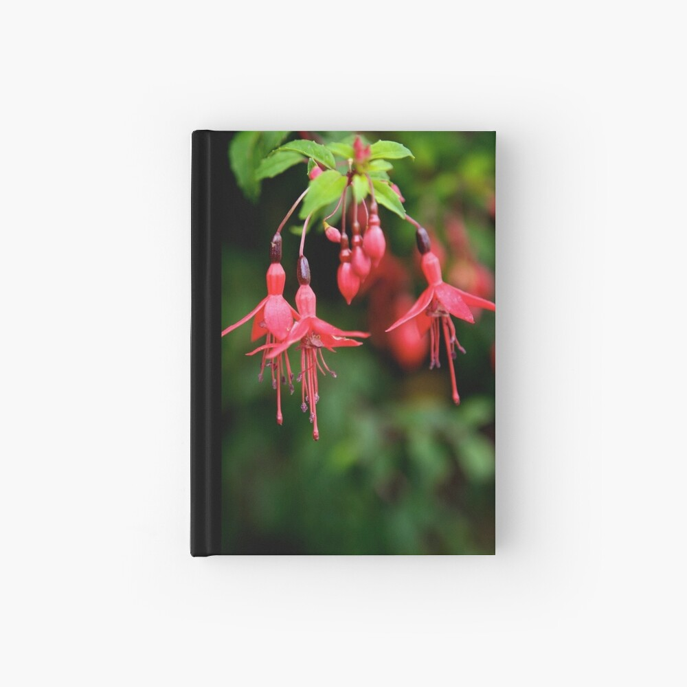 Fuchsia Hedge at Loch Na Fooey 3 Hardcover Journal