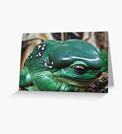 GREEN TREE FROG - Queensland Greeting Card