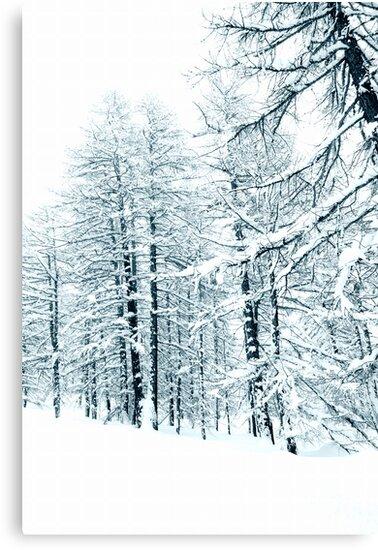 Winter woods by Steve plowman