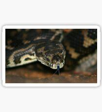 South-West Carpet Python Sticker