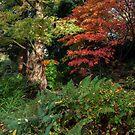 Herbst im Park von Paul Barnett