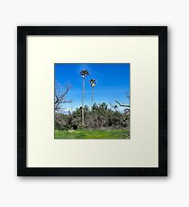 Tough Palms Framed Print