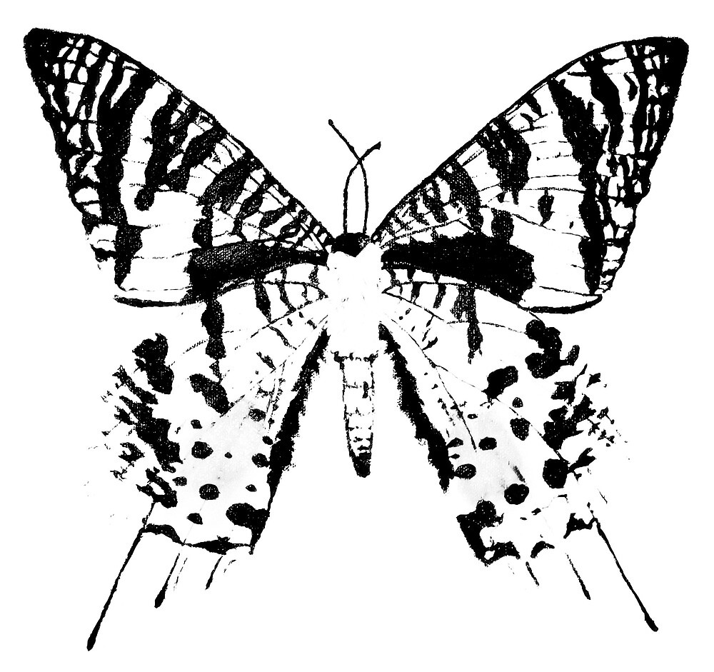 Black and White Sunset Moth by Erin Bailey