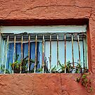 Old Window by Savannah Gibbs