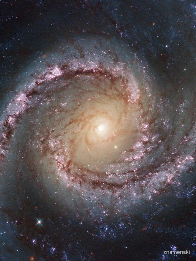 #Grand #Swirls: NGC 1566 #Beautiful #Galaxy, Astronomy, Cosmology, AstroPhysics, Universe by znamenski