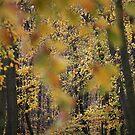 Spectacular autumn trees  2017. © Dr.Andrzej Goszcz by © Andrzej Goszcz,M.D. Ph.D