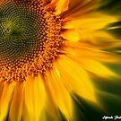 Sunshine ! by Elfriede Fulda