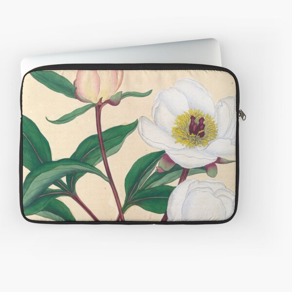 Botanical illustration: Peonies by Henry Charles Andrews – State Library Victoria Laptop Sleeve