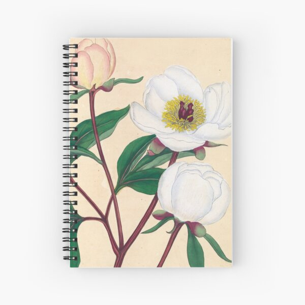 Botanical illustration: Peonies by Henry Charles Andrews – State Library Victoria Spiral Notebook