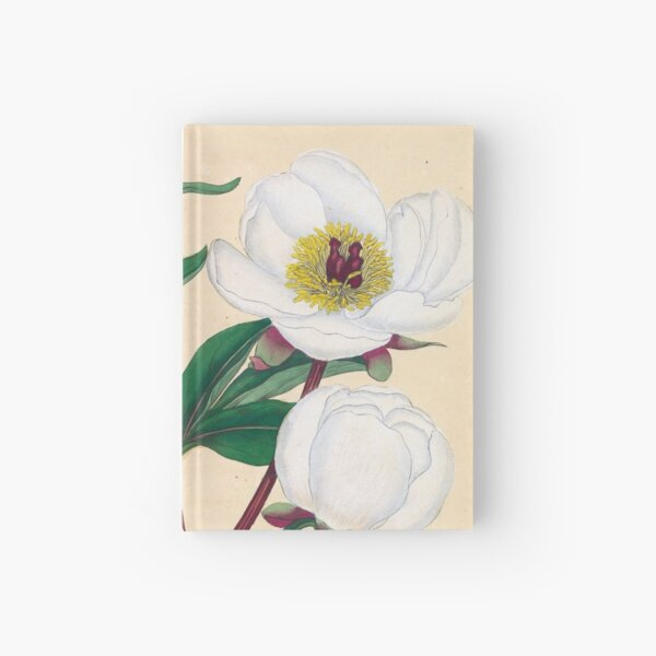 Botanical illustration: Peonies by Henry Charles Andrews – State Library Victoria Hardcover Journal