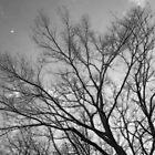 Jersey Oaks by RVogler