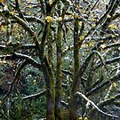 A SPRINKLE OF SNOW ON THE BRANCHES! by Elaine Bawden