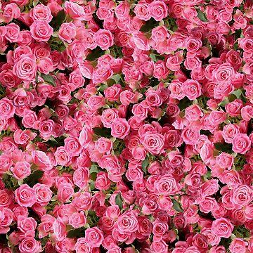 Pink Rose Floral Pattern by KolJoseph