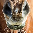 Straight From the Horses Mouth by Randy Turnbow