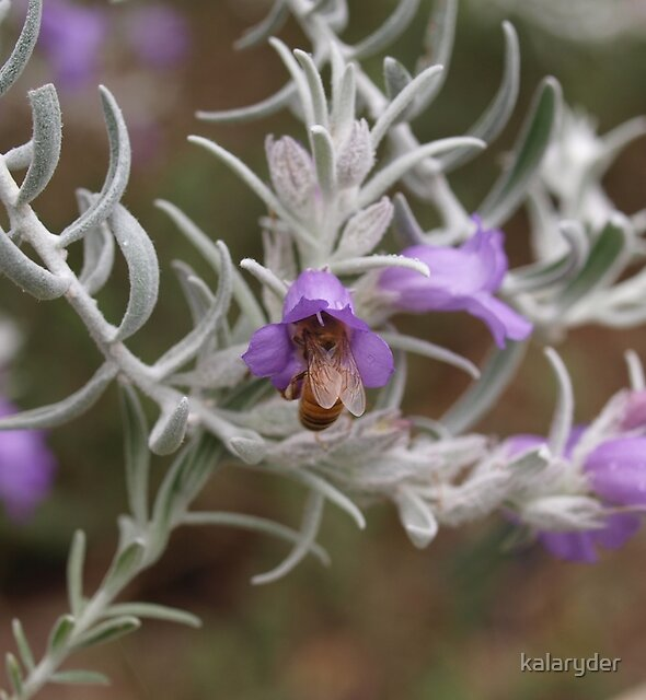 Capped Bee by kalaryder