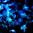 Jelly Fish2 by oddoutlet