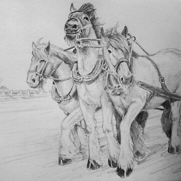Three draft horses by Ian Shiel by Ruckrova