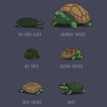 Know Your Turtles by CrumblinCookie