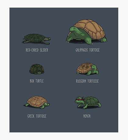 Know Your Turtles Photographic Print