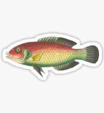 Fish Fish Fish Sticker