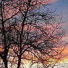 Winter's silky sky by crystalline