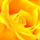 Yellow Rose for Mum by Auntymazza