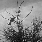 Lone Dove by karenuk1969