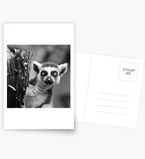 Ring-tailed Lemur Postcards