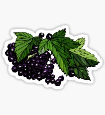 Hand drawn colored sketch  with currant  berries  isolated on white.  Sticker