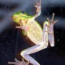 """FROG """"Help Me I'm Stuck"""" by sharont"""